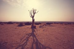 African tree Stock Image