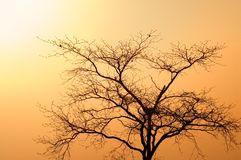 African tree at dusk. African standing tree at dusk Stock Photography