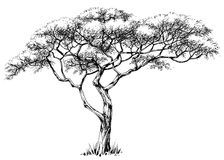 African tree vector illustration
