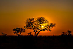 African sunset. Beautiful african landscape at sunset with branches of trees in the background. Isimangaliso Wetland Park, KwaZulu-Natal, South Africa Stock Images