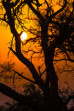 African tree at sunset Stock Photography