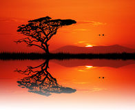 African tree at sunset Stock Photo