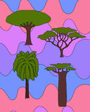 African trees set. Vector floral hand drawn african trees - date palm, acacia, baobab tree, dragon tree. isolated digital nature sketch Royalty Free Stock Photo
