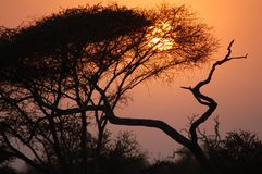 African twilight. African night sky, dusk in the african bush Stock Image