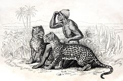 The African and two leopards in the savanna. Kiev, Ukraine - Feb. 28, 2018: ILLUSTRATIVE EDITORIAL The reproduction of antique engraving that shows the African Royalty Free Stock Images