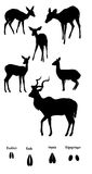 African ungulates in silhouette. Collection of various African ungulates (Impala, bushbuck, klipspringer and kudu) on white background in black silhouette. Also Stock Photo