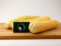 African Union flag on a wooden panel with corn isolated on a whi Royalty Free Stock Images