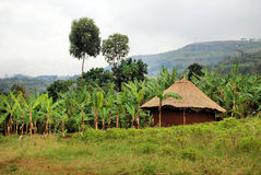 African Village. A grass hut in the village of kapchorwa in uganda east africa Royalty Free Stock Photography