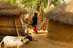 African Village. Scene mud thatch huts sheep lady Royalty Free Stock Photos