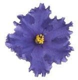 3 african viole Стоковые Изображения RF