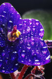 African Violet with droplets. An African violet with water droplets on it stock photo