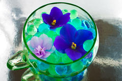 African violet flowers in the hydrogel Stock Images