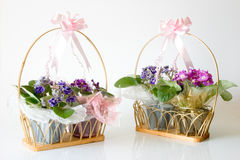 African Violets  - Basket gifts Royalty Free Stock Images