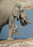 African Waterhole Stock Images