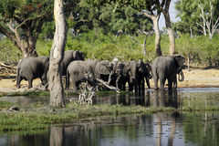 African Watering Hole Royalty Free Stock Photos