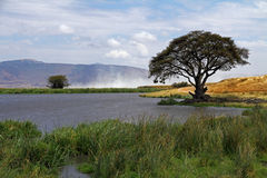 African Watering Hole Landscape. A watering hole in the Ngorongoro crater of Tanzania, Africa royalty free stock image