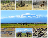 African wild animals. Safari collage, large group of fauna stock photo