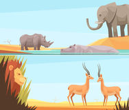 African Wild Banners Set. Two horizontal wild animal banners set with flat images of prey and beast animals with tropical landscape vector illustration Stock Photos