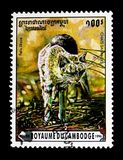 African Wildcat Felis silvestris lybica, Wild cats serie, circa 1996. MOSCOW, RUSSIA - NOVEMBER 24, 2017: A stamp printed in Cambodia shows African Wildcat Felis Stock Photography