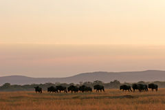 African wilderness landscape Royalty Free Stock Image