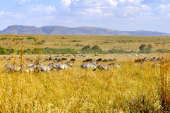 African wilderness landscape. Beautiful landscape in the natural reserve of masai mara. Kenya Stock Image