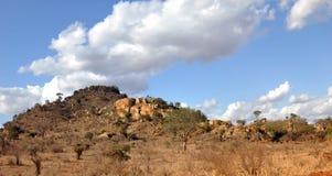 African wildlife. In the Tsavo East National Park, Kenya royalty free stock photo