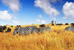 African wildlife Stock Images