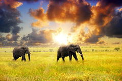 African wildlife. African landscape. African elephants at sunset in the savannah, Serengeti, Tanzania stock image