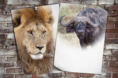 African wildlife background Stock Image