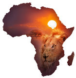 African Wildlife Map. Africa Wildlife Map Design -  Isolated on White Royalty Free Stock Image