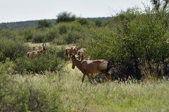 African wildlife, Namibia stock photography