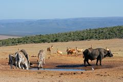 African wildlife at a waterhole Stock Photo