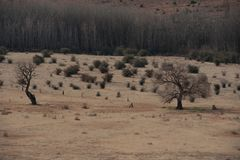 African winter landscape with poplar trees. African winter landscape with poplar and willow trees Eastern Free-state South Africa stock images