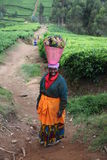 African woman. On a tea plantation Royalty Free Stock Photography