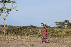 African woman carrying firewood on head royalty free stock images