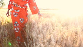 African woman in traditional clothes walking in a field of crops at sunset or sunrise stock video footage