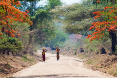 African woman walking. African women walking along Jacaranda alley in remote Africa Stock Photos