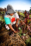 African woman works in her garden Stock Image