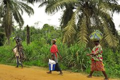 African women carrying food and wood. Three african women carrying food and wood along the road, african rainforest Royalty Free Stock Photos