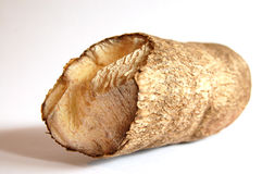 African yam. This is an image of a tube yam Stock Photos
