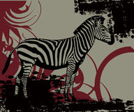 African Zebra. Editable  illustration of a African Zebra Stock Photo