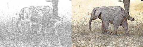 Africana Del Loxodonta Del Elefante Africano Que Dibuja Para Ser