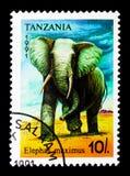 Africana do Loxodonta do elefante africano, serie, cerca de 1991 Fotos de Stock
