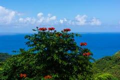 Africano alaranjado Tulip Tree Against Deep Blue do oceano imagens de stock royalty free