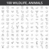 Africano de la fauna, mar, nacional, bosque, animales del parque zoológico, gato, perro, lobo, zorro, tigre, pescado, oso, caball libre illustration