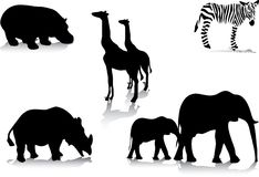 Africas Animals Stock Photography