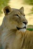 Africas wild lebende Tiere Stockfoto