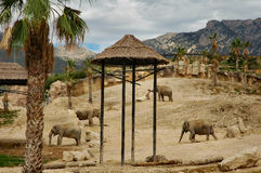 Afrika stock fotografie