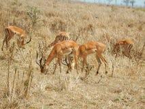 Afrika Royaltyfri Foto