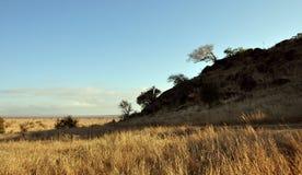 Afrika in de ochtendzon Royalty-vrije Stock Foto